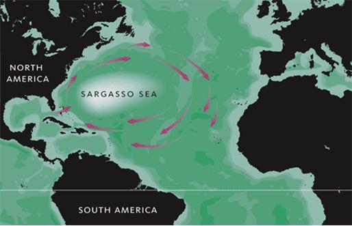 대규모 소용돌이 바다인 사르가소해 위치. 서쪽 끝이 버뮤다