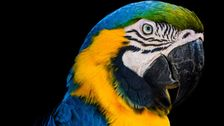 Last Wild Macaw In Rio De Janeiro Visits Zoo Every Day