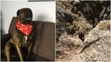 Chevy the dog sporting a fashion-forward scarf (left) and when she was stuck on a ledge above the cliff (right).