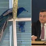 Draghi e il siparietto col pavone: