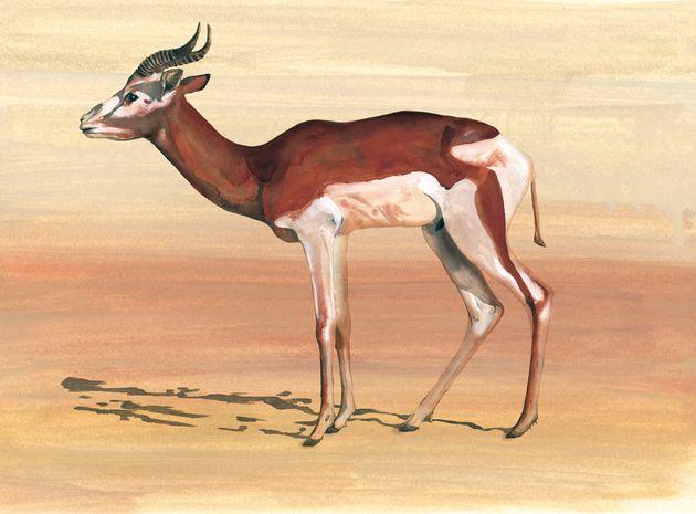 Una ilustración de una gacela de