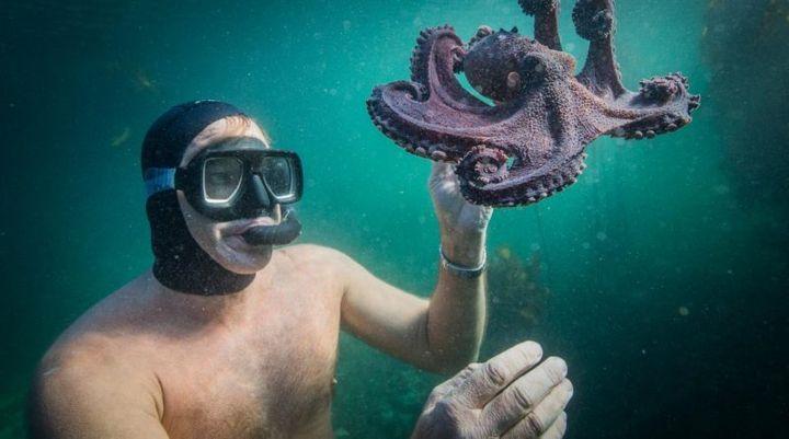 Una escena del documental 'My Octopus Teacher'.