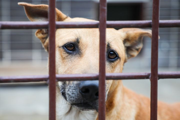 """One shelter said it has had """"an unprecedented number of returns"""" recently."""