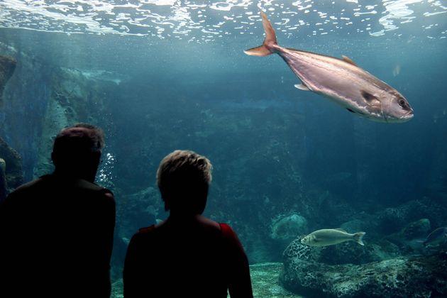 Ηράκλειο: Πέθαναν ξαφνικά δύο καρχαρίες στο Ενυδρείο