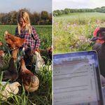 Η νέα μόδα της πανδημίας: Νοικιάζουν κότες - όχι μόνο για τα φρέσκα αυγά