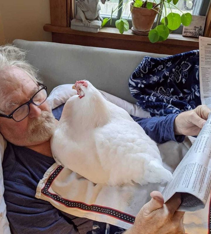 Abby's father reading his newspaper with company from Lila the hen.