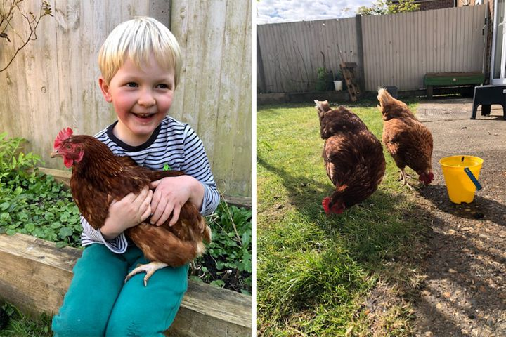 Left: Henry holding one of their hens. Right: Sausage and Digger in action.