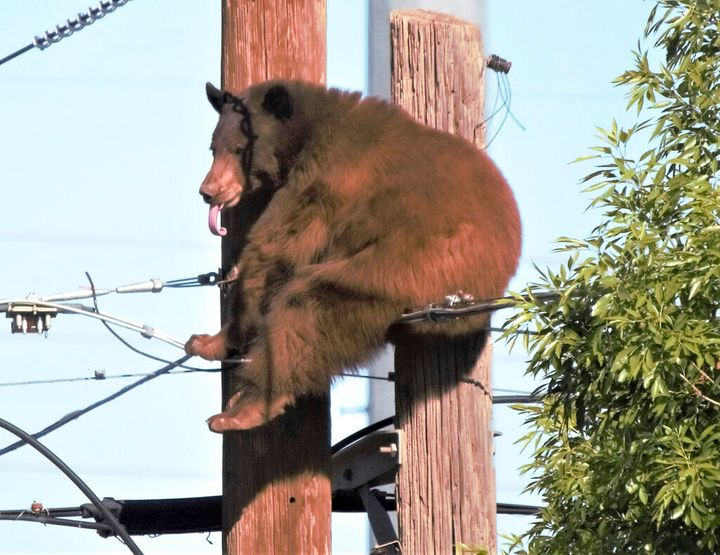 Residents of an Arizona border city were left in disbelief by a surprise visit from a bear.