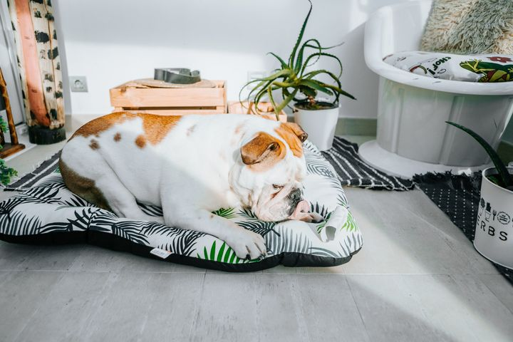 Before you head back to the office, create a safe, comfy place where your pet can have somerelaxing alone time.