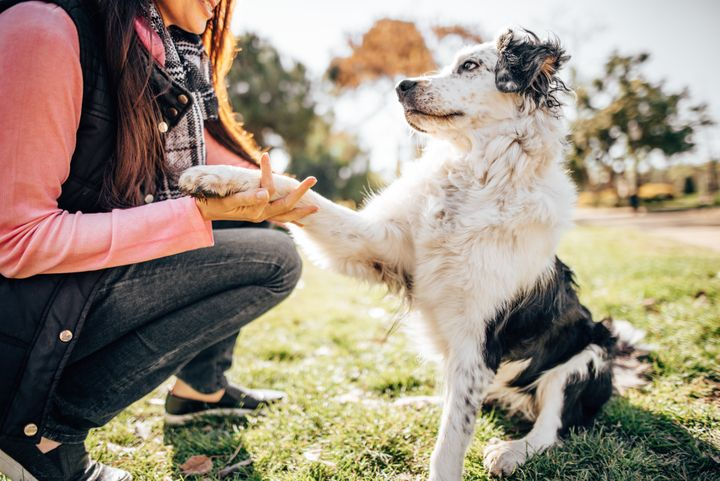 A dog trainer can help you assess how to make the transition back to the office as easy as possible on your pet.