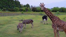 「におい何とかして」動物園に意見⇒園長が『嗅ぐ楽しみ方』を提案、回答に反響広がる