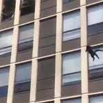 Βίντεο: Γάτα πέφτει από τον 5ο όροφο φλεγόμενου κτιρίου, προσγειώνεται και αποχωρεί
