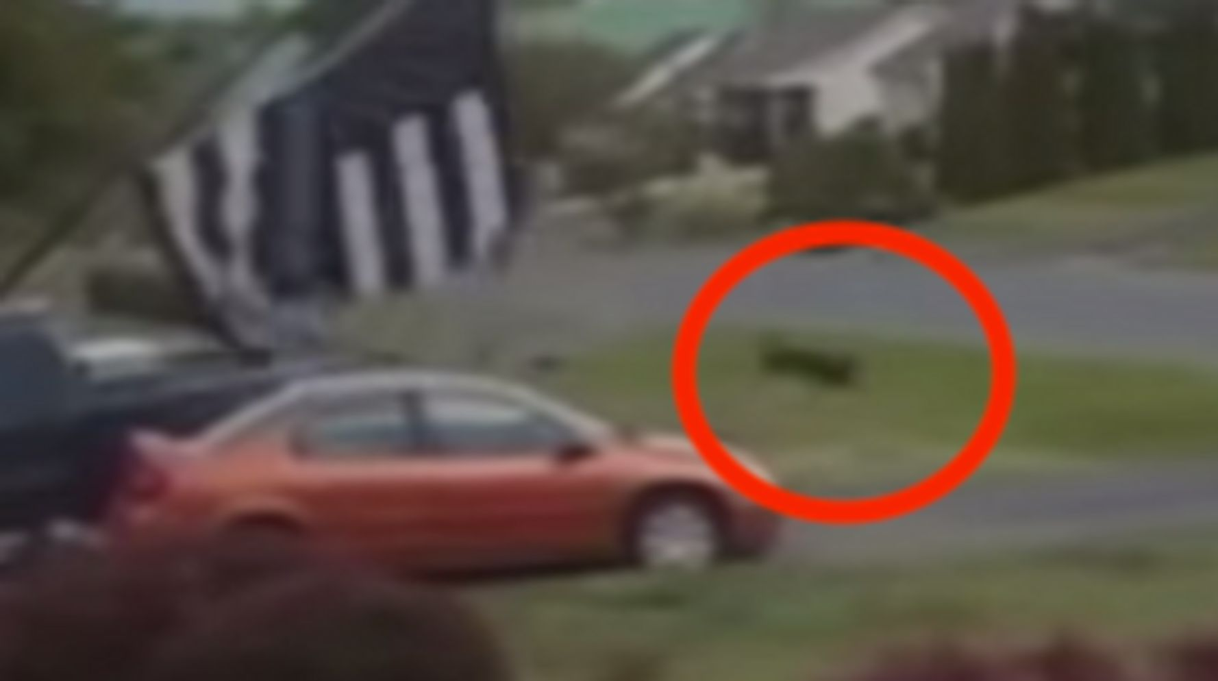 Dust Devil Takes 70-Pound Dog For A Terrifying Spin
