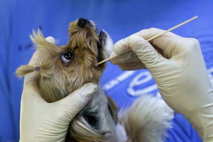 Un veterinario toma una muestra a un perro