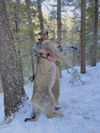 Montgomery told Colorado Parks and Wildlife that he shot a mountain lion with a handgun, a direct violation of his terms of p