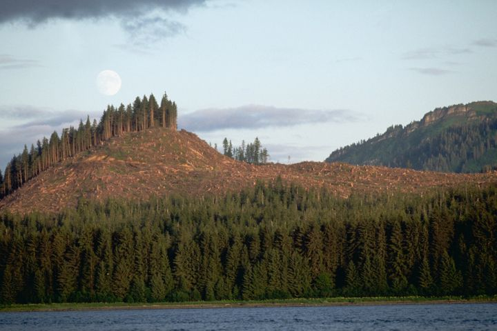 A logging operation leaves a bare swath in Alaska's Tongass National Forest.