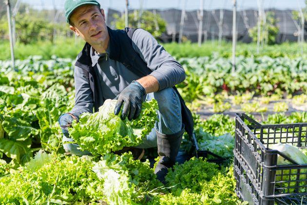 Piccoli coltivatori al centro del cambiamento globale