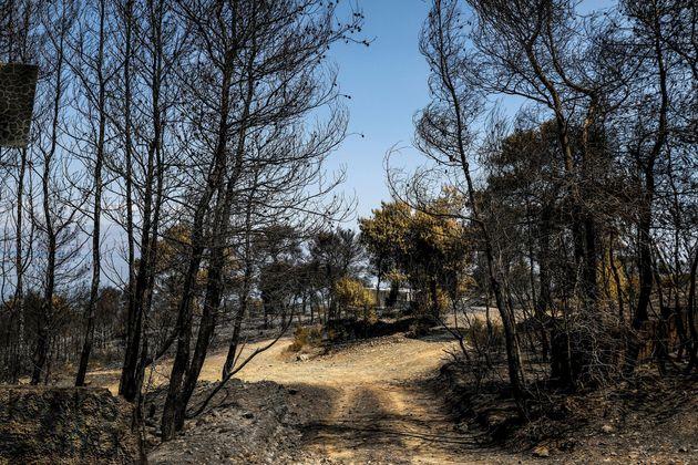 Εικόνα καταστροφής από τη μεγάλη φωτιά στην