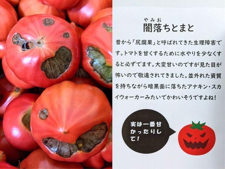 '어둠에 빠진 토마토'