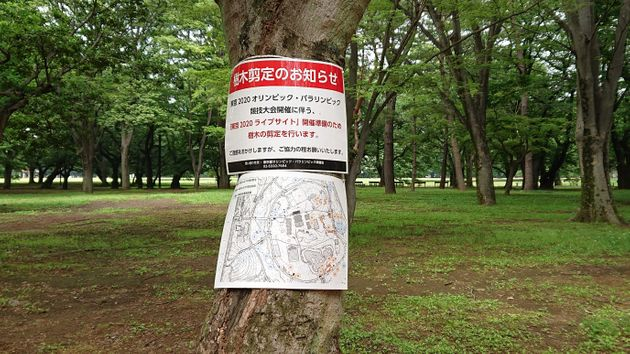 代々木公園の木に巻かれた、剪定のお知らせ