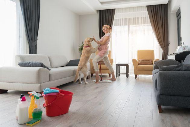 Dog sitter o colf, chi si occupa in casa degli animali