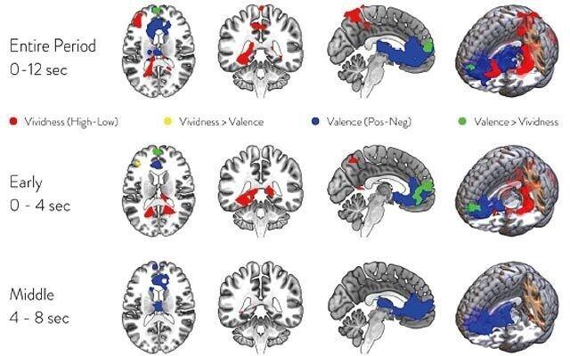 상상할 때의 뇌 기본모드네트워크 활동. 빨간색은 시나리오의 생생함을, 파란색은 긍정-부정의 느낌을 관장하는 부위다.