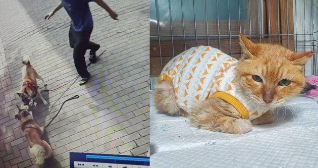 Gato asesinado por 2 perros medianos