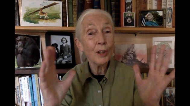 Jane Goodall speaks via video from her home for a Greentech Festival event last September in Berlin....