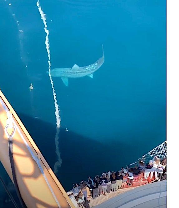 Jaw-Dropping: Gargantuan Shark Has Students On Sailboat Screaming