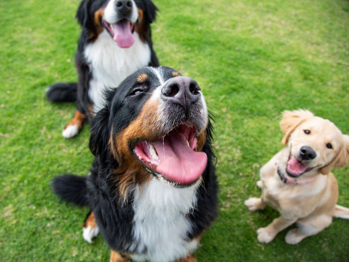 Dog breed popularity can vary based on geography.