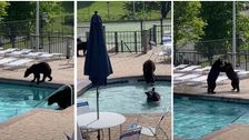A Whole Bunch Of Bears Crashed A High School Pool Party