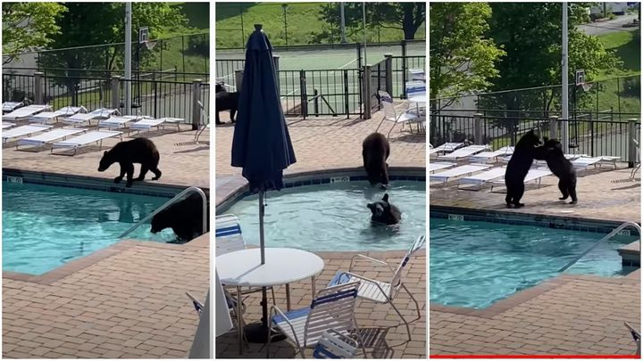 A triptych of partying bears.