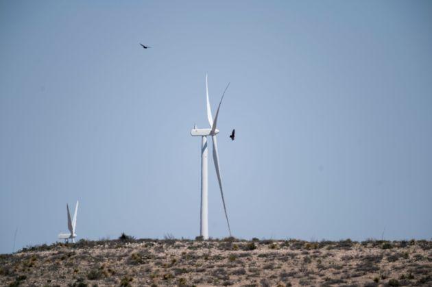 Les oiseaux disparaissent et les éoliennes ne sont pas le premier coupable (photo prise au Texas...