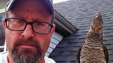 Walter The Friendly Grouse Becomes Man's Backyard Companion