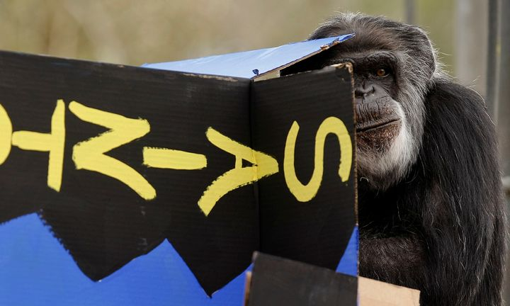 Cobby, themale chimpanzee living in an accredited North American zoo, has died.