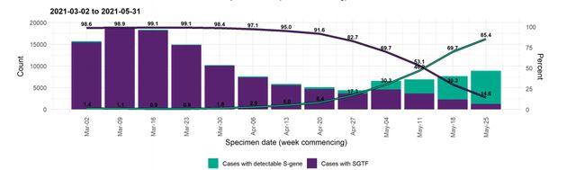 Les cas liés au variant alpha (anglais) sont en violet. Ceux liés au variant delta (indien) en