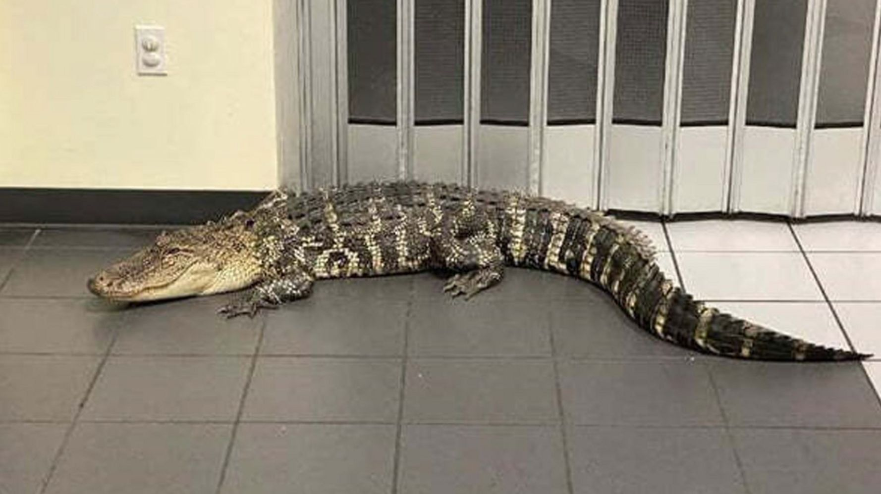 Customer Finds 7-Foot Alligator Inside Florida Post Office