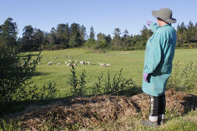María del Carmen Caamaño critica que vayan a instalar un aerogenerador al lado del prado donde pacen...