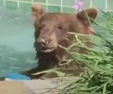 수영장 주인이 먹다 남긴 칵테일을 마시고 물놀이를 즐기는