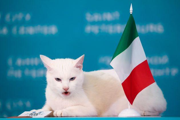 Aquiles, el gato ruso que predice el ganador de los partidos de la Eurocopa