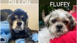"""Dillon, who """"needs frequent washes"""" and Fluffy who """"may have a few mechanical issues."""""""