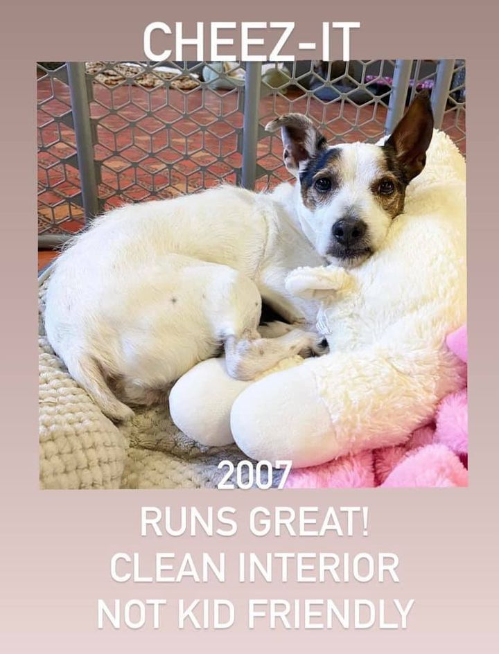"""Cheez-It, a Jack Russell who """"runs great!"""" and has a """"clean interior."""""""