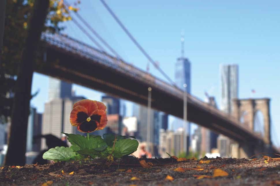 Paul Harfleet has now planted pansies across the United Kingdom, Europe, Canada and the United States – including this one by the Brooklyn Bridge in 2019.