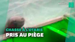 Ce bateau de pêche s'est retrouvé pris dans une bataille entre des orques et des