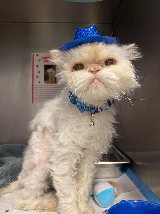 19歳の誕生日を祝ってもらった保護施設の猫に、待ち望んでいたプレゼントが届く