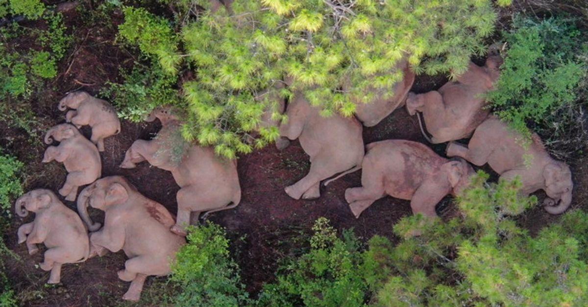 La marcia degli elefanti e il ruolo cruciale dei filosofi (di I. Pratesi)