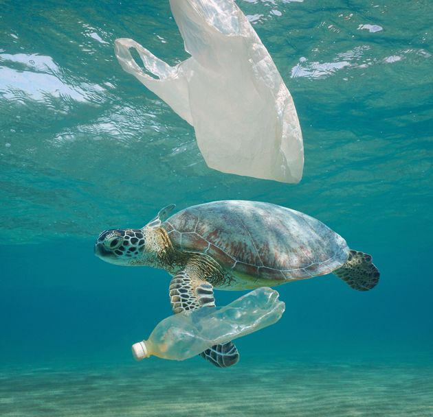 Plastic waste pollution underwater, a sea turtle with plastic bag and bottle in the