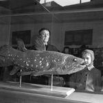 Κοιλάκανθος: Το ψάρι που ζει έναν αιώνα και κυοφορεί 5