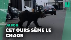 Un ours se déchaîne dans une ville au Japon et blesse 4