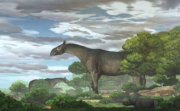 Βρέθηκαν απολιθώματα γιγάντιου ρινόκερου - Ψηλότερος από